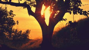 663-Boom-zonsondergang-kleurrijk-1920-Fotos-voor-Therapeuten-1560x878[1]