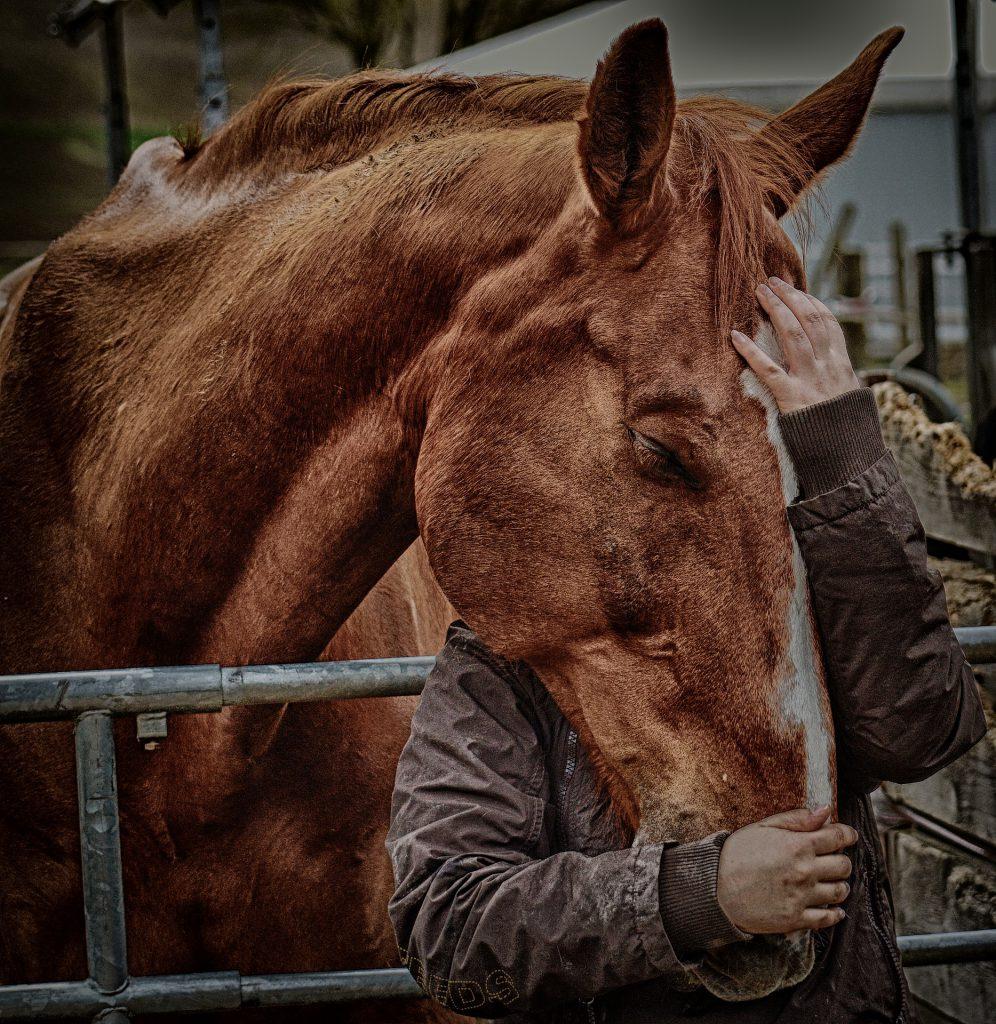 Deze afbeelding heeft een leeg alt-attribuut; de bestandsnaam is love-for-animals-3698639_1920-1-996x1024.jpg